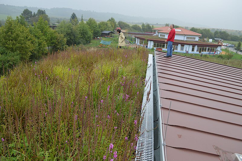 irrigated green roof